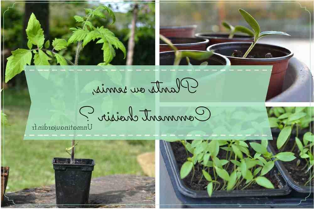 Comment semer votre propre salade