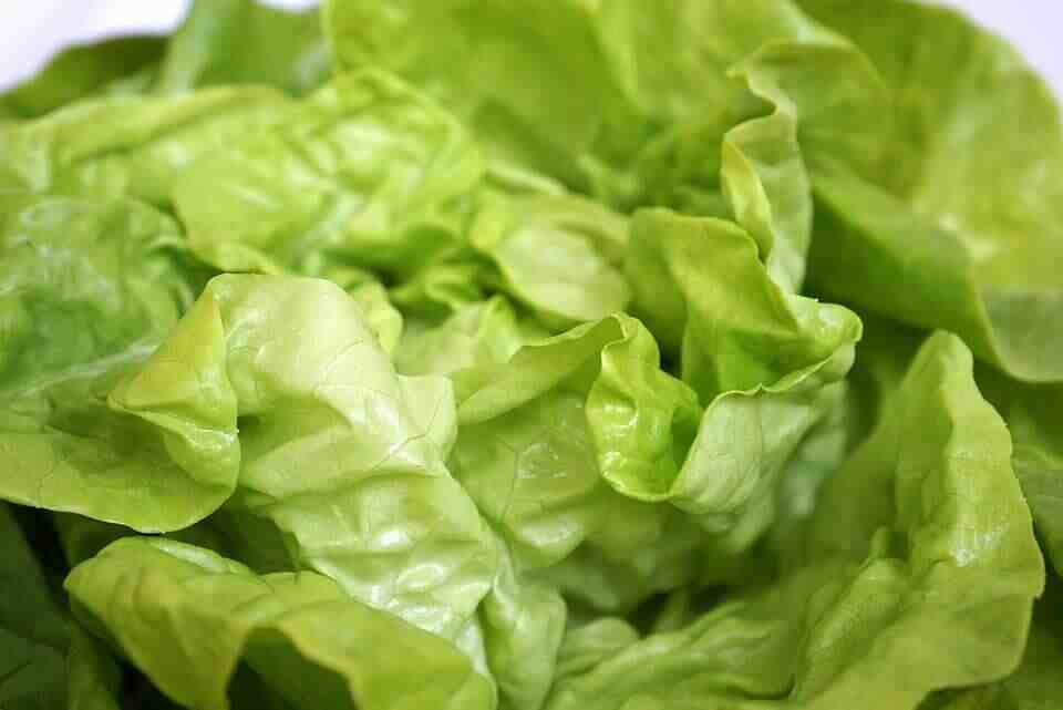 Pourquoi ne pas manger de la salade tous les jours ?