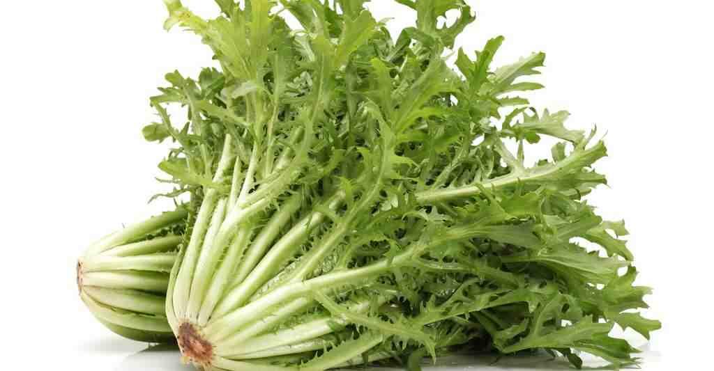 Quelle variété de salade pour l'été ?