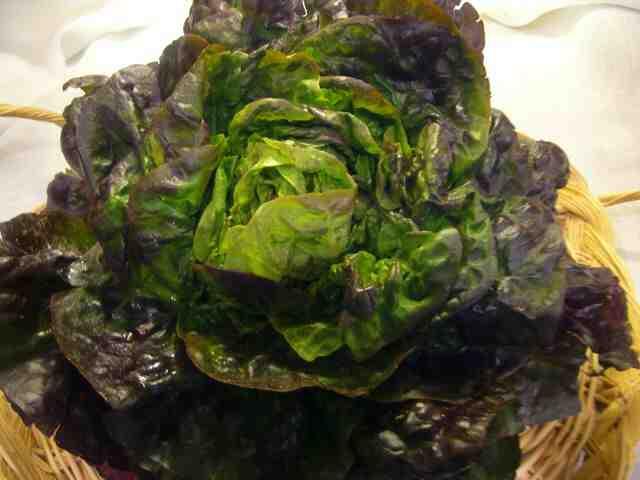 Quelles sont les salades croquantes ?