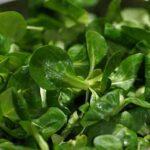 Quels sont les différentes variétés de salades ?
